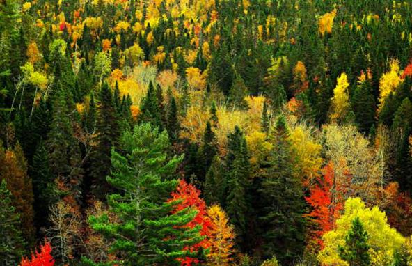 лес, тайга