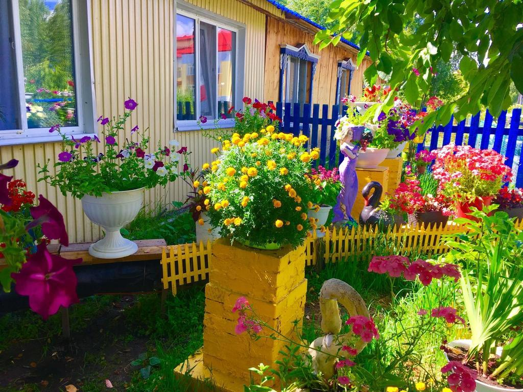 дача, огород, дом, участок, цветы